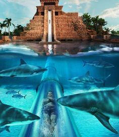 Siam Park ,Teneriffe (Spanish Island in Atlantic ocean) Is this for real?!