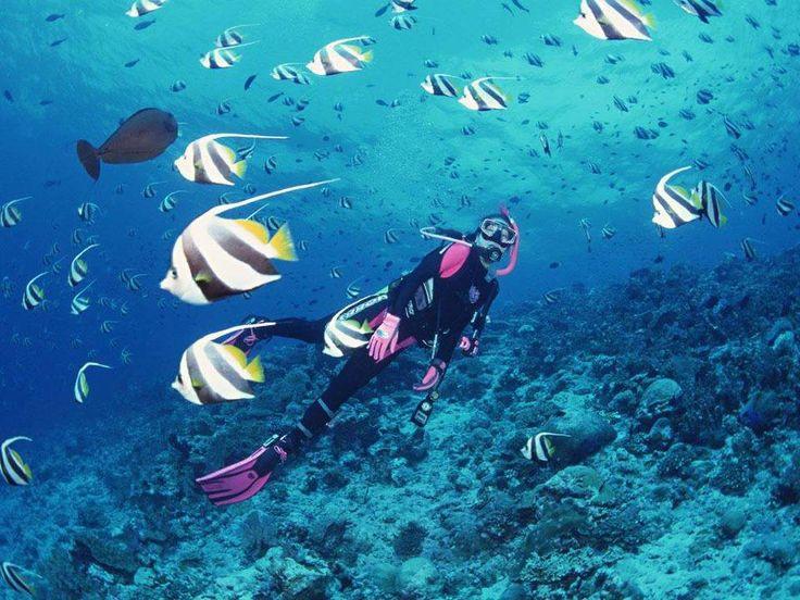 Diving in Papua  #travel #indonesien #bucketlist