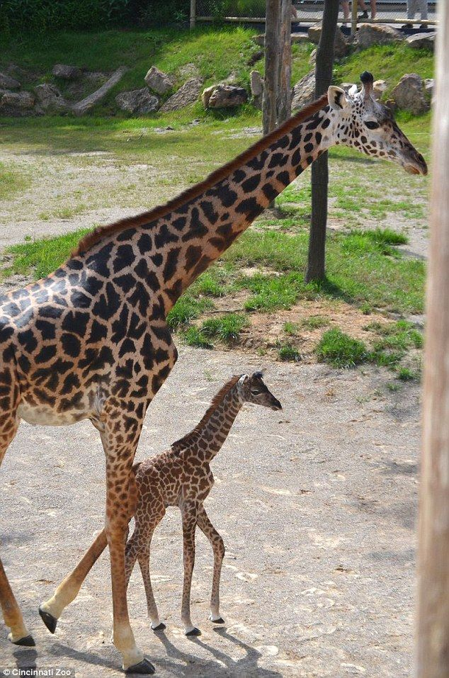 Best Animal Mums And Their Babies Images On Pinterest - 22 adorable parenting moments in the animal kingdom