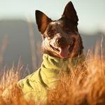 Cool Bild ! #Hundemantel #Frühling
