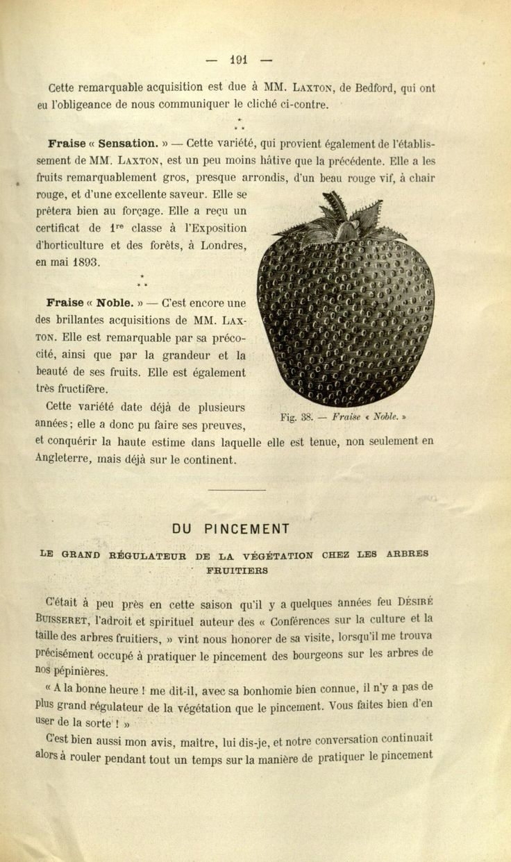 793 best fruit images on Pinterest | Botanical drawings, Botanical ...