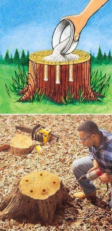 diy stump removal -use epsom salt