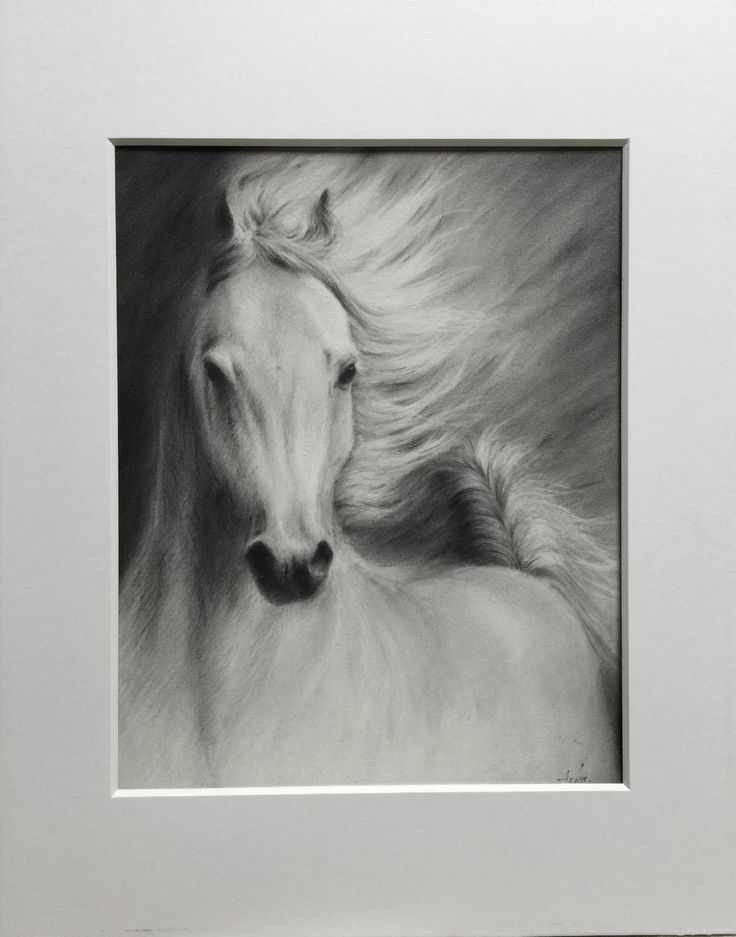 Vogue Pencil Drawings Of Animals T Original Paintings