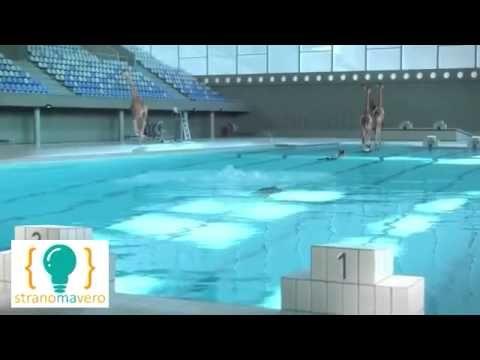 Ma una giraffa sa fare un tuffo olimpionico in piscina? - http://www.stranomavero.xyz/animali-bestiali/ma-una-giraffa-sa-fare-un-tuffo-olimpionico-in-piscina.html