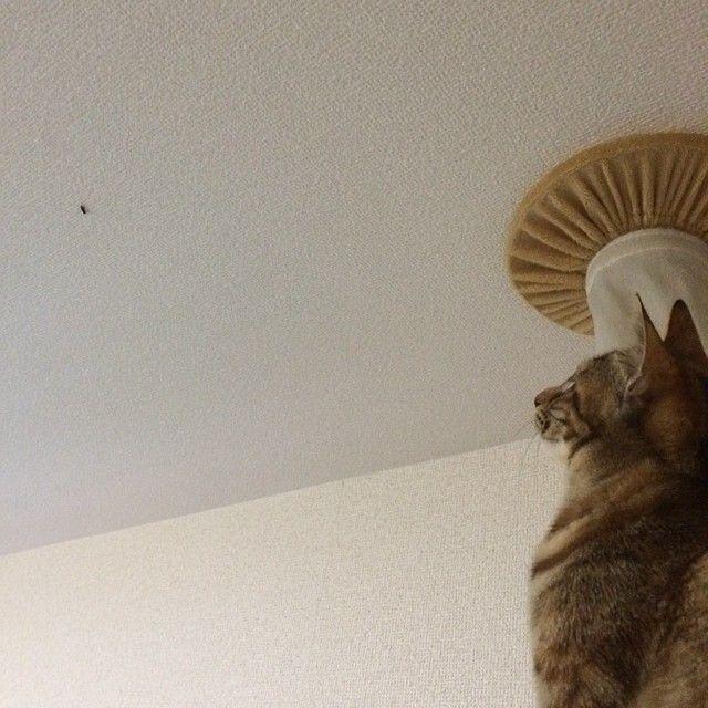天井の虫が怖い