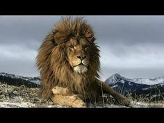 LA VENGANZA DEL TIGRE Documental de Animales Salvajes Documentales National Graphic - YouTube Ncastro