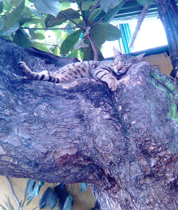 Después de una buena comida...una buena dormida..al natural!!!