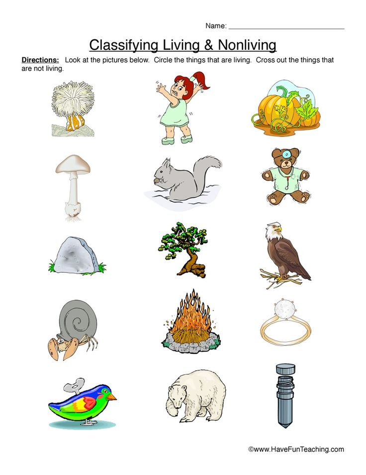 classifying living and nonliving things primary version