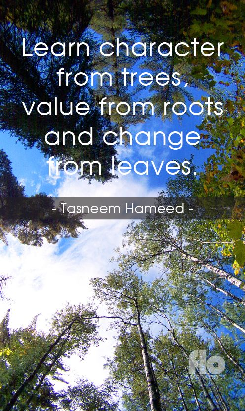 Learn character from trees, value from roots and change from leaves. ~Tasneem Hameed  #FLOhardwoods