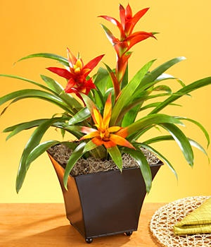 ingenious tropical foliage house plants. Tropical Bromeliad Garden 13 best Foolproof Houseplants images on Pinterest  Indoor house