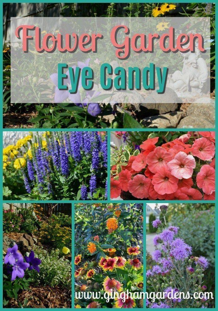 Lots And Lots Of Beautiful Flower Garden Eye Candy Need Some Flower Garden Ideas Need A Winter Pick Me Up Flower Garden Design Flower Garden Annual Flowers