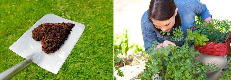 rostliny a byliny vyzadujici hnojeni a nemajici rady hnojeni