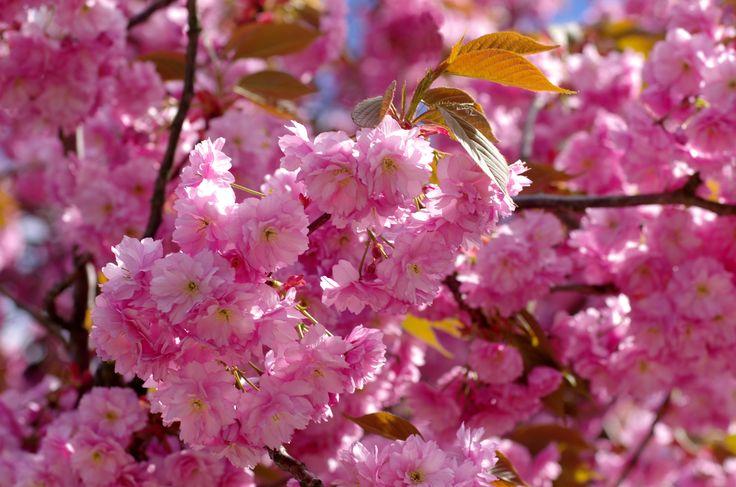 Zapraszamy www.florysta3d.pl