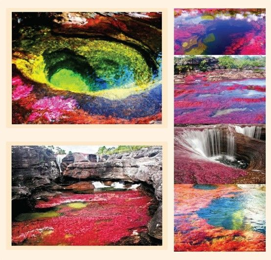 "These are unaltered photos of the Caño Cristal, or ""Rainbow River,"" located in Sierra de la Macarena, Colombia. In between the rainy and dry seasons, when the water level reaches a certain point, the sun hits the moss and algae and the river ""blooms"" into amazing technicolor."