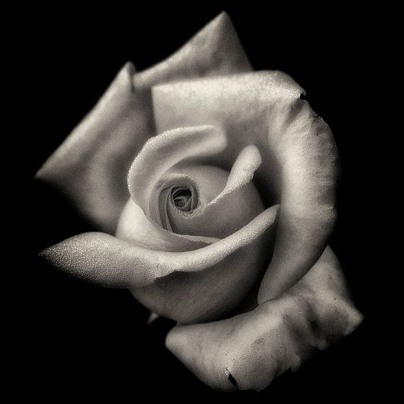43 best images about Black and White Flowers on Pinterest ...