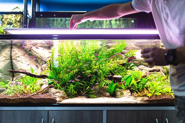 Aquarium Shop Near Me Aquarium Store Near Me In 2020 Aquarium Shop Marine Aquarium Fish Aquarium