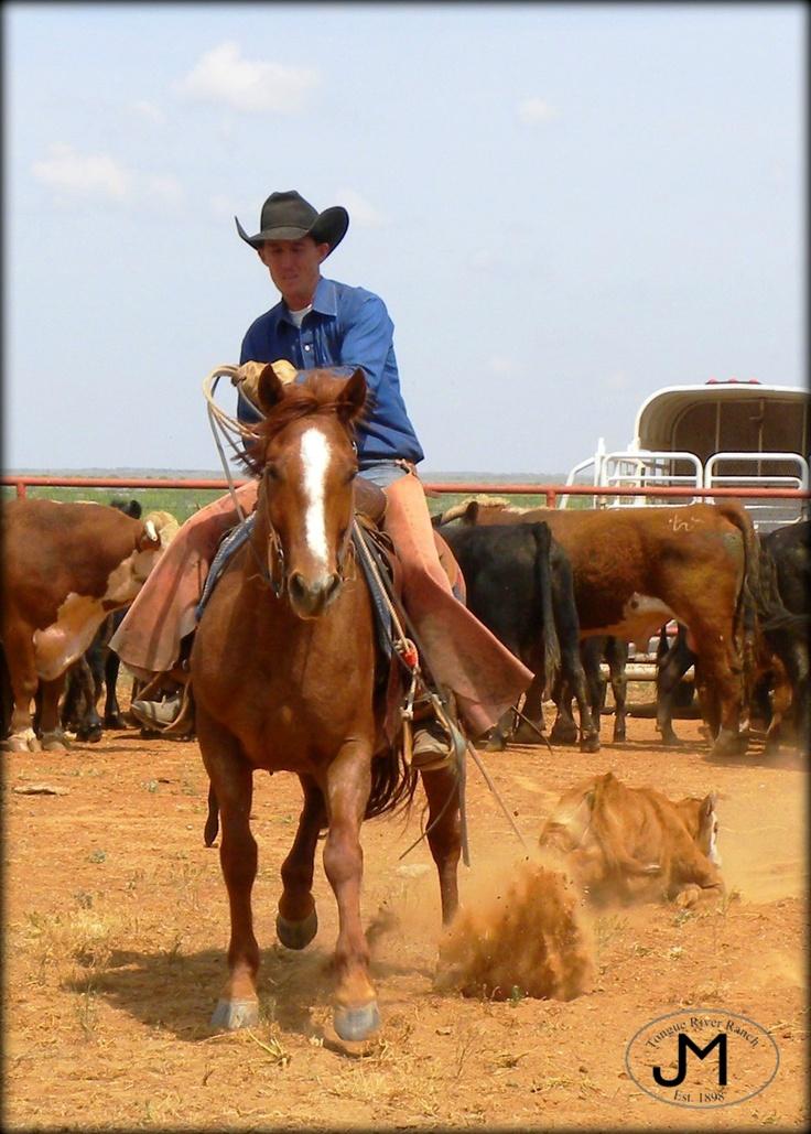 Cowboy Dragging Calves Spring Works Tongue River