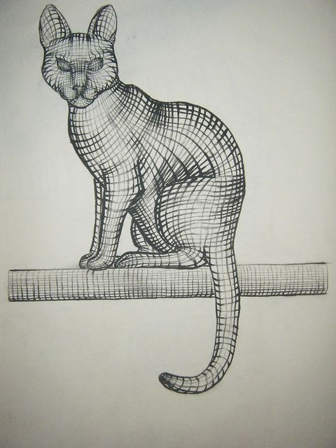Contour Line Drawing Of A Cat : Best contour drawing images on pinterest