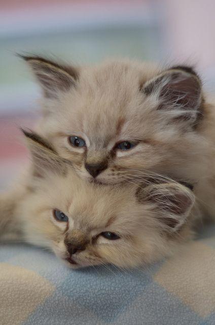kitten stack...