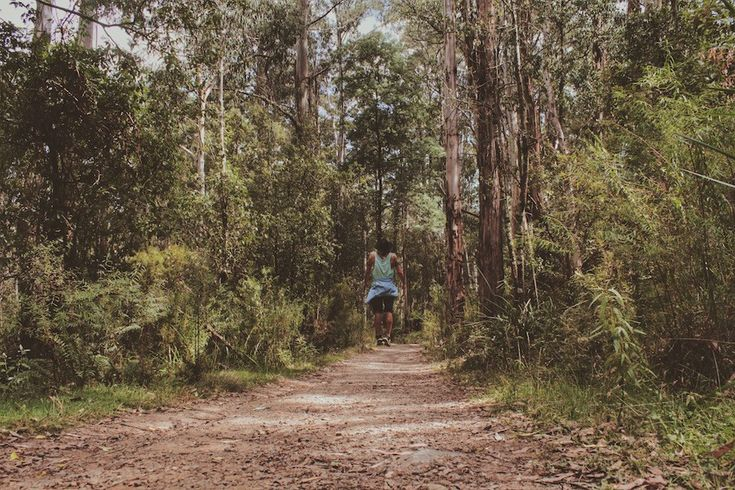 Wandering the forest: http://lostboymemoirs.com/day-in-dandenong-national-park/  A Day in the Dandenong National Park - Lost Boy Memoirs | Travel and Adventure Blog