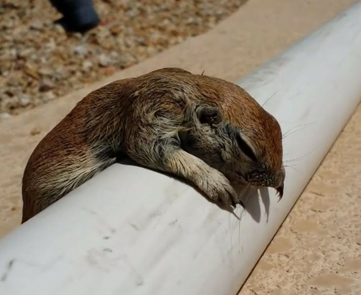 When He Found A Drowning Squirrel, This Pool Worker Used CPR To Save Its Life