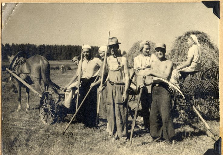 From Grandma P.'s trip back home to Finland, possibly around Mikkeli, 1945 ... Everyone helped cut hay ... Finnhorse in the family! ... Traditional harness, Finnish horse