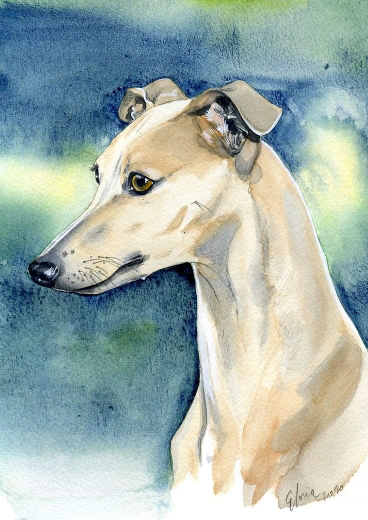 Petit Lévrier Italien / Italian Greyhound                              …