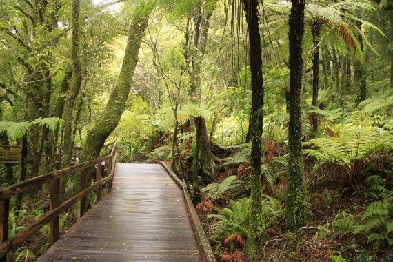Instant digital download. Rain forest. New Zealand by ArtUnsung