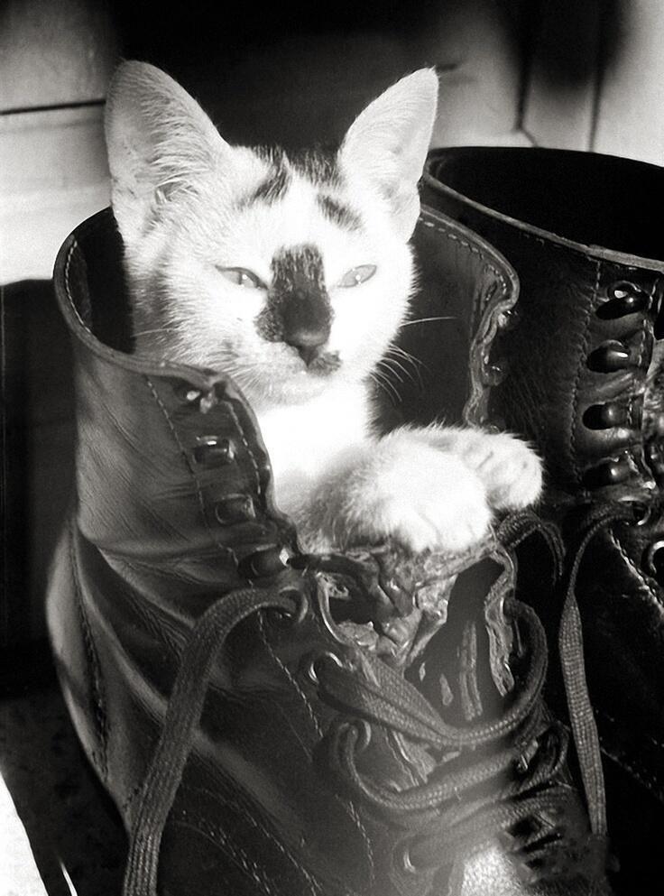 Black Cat Socialism