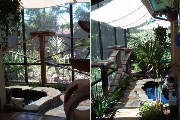 Catio Showcase Is A Wonderful Site With Lots Of Ideas For