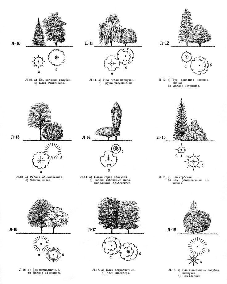 Ландшафтные группы из растений | Tree and Shrub Placement