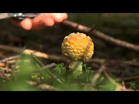 In this video Chris Aerni from the Rossmount Inn, St Andrews by the Sea takes a journey through the New Brunswick foliage to hunt for some of the finest wild mushrooms you could hope to find, and then he uses his cooking skills to make a delicious meal.