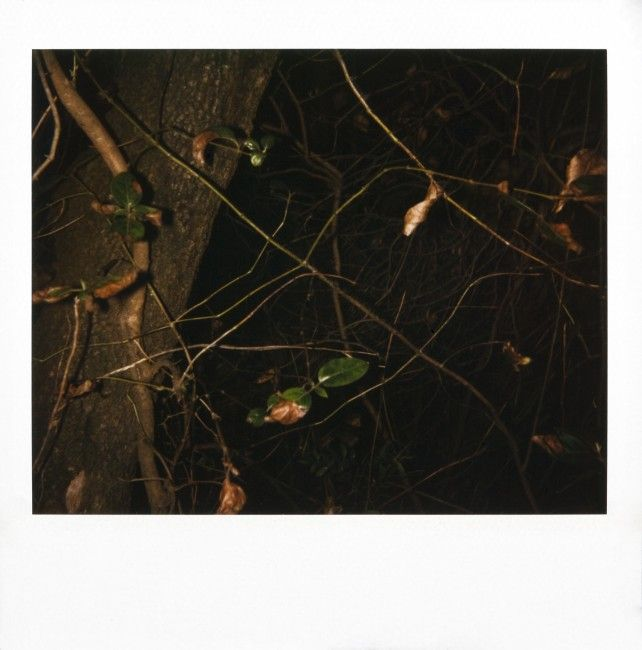 Rodney Graham, Montserrat, 1995 80 Polaroids, 9 x 7.5 cm each (without Polaroid frame). Rodney Graham's oeuvre since the late 1970's can only be understood as the result of an unplanned wander through an unmapped territory (the forest), in which serendipity findings determined each step ahead.