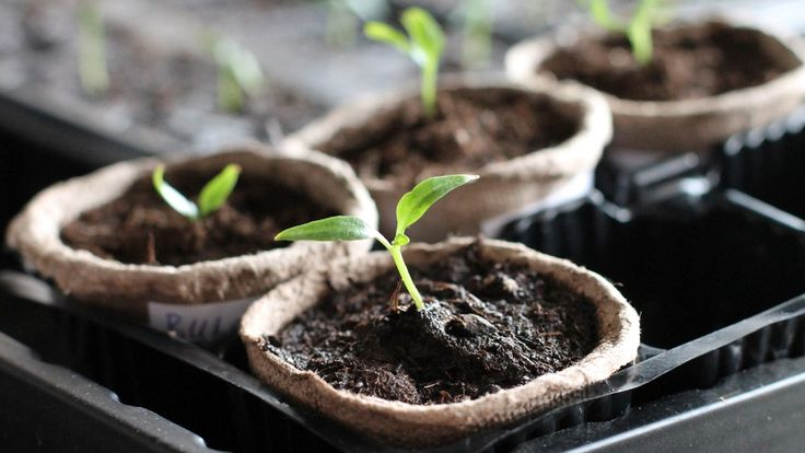 Watching your garden grow is exciting, but roadblocks can be frustrating. That's why I'm giving you a great cheat sheet for growing a vegetable garden....