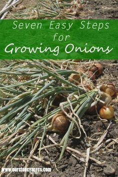 Seven Easy Steps for Growing Onions