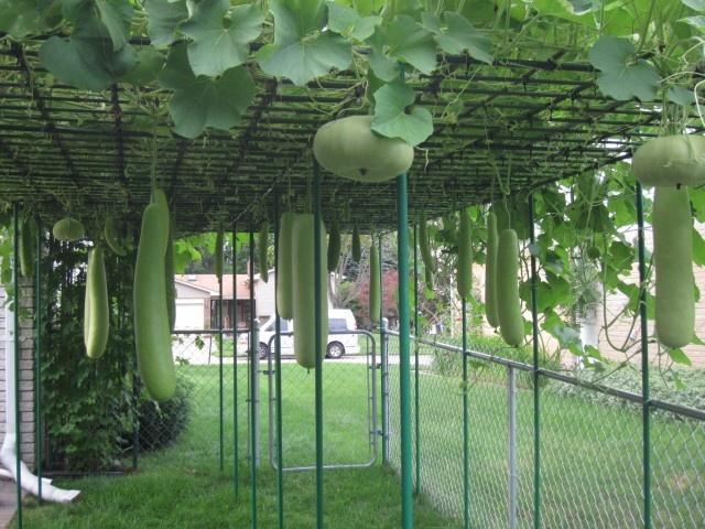 29 best images about backyard garden on pinterest for Backyard vegetable garden