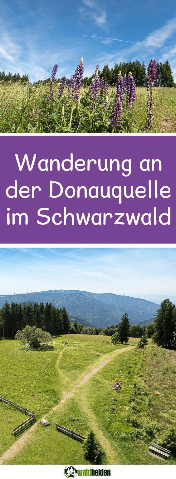Eine leichte Wanderung im Schwarzwald. Von der Donauquelle zum Brendturm