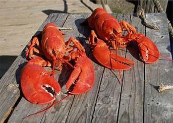 Fresh Seafood Lobster Online | Best Clam Chowder | Lobster Bisque
