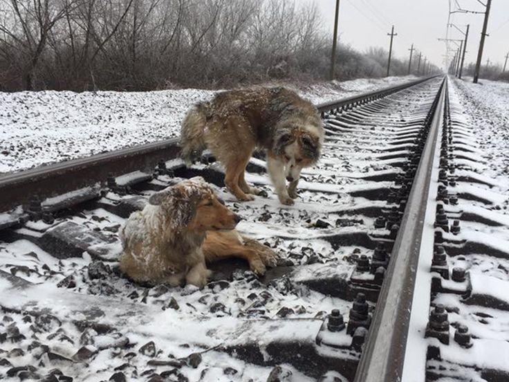 ¿ Sabías que estudios demostraron que algunos perros callejeros en Rusia saben utilizar los ferrocarriles subterráneos, y perciben, de acuerdo a la cantidad de personas que se bajan en cada estación, cuales les convienen para encontrar comida abandonada en vagones ?
