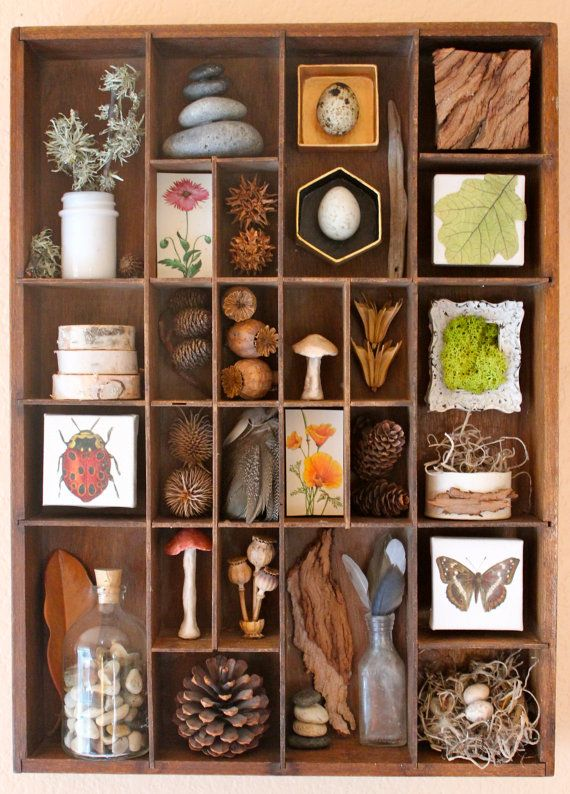 This is an Assemblage of found woodland and forest items. It is all contained in a vintage wood compartment box, probably used for wood type