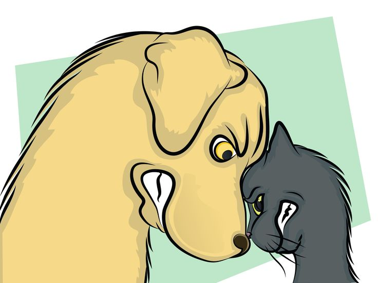 Canines and felines can be friends, it just takes the right introductions, a lot of patience and some know-how.