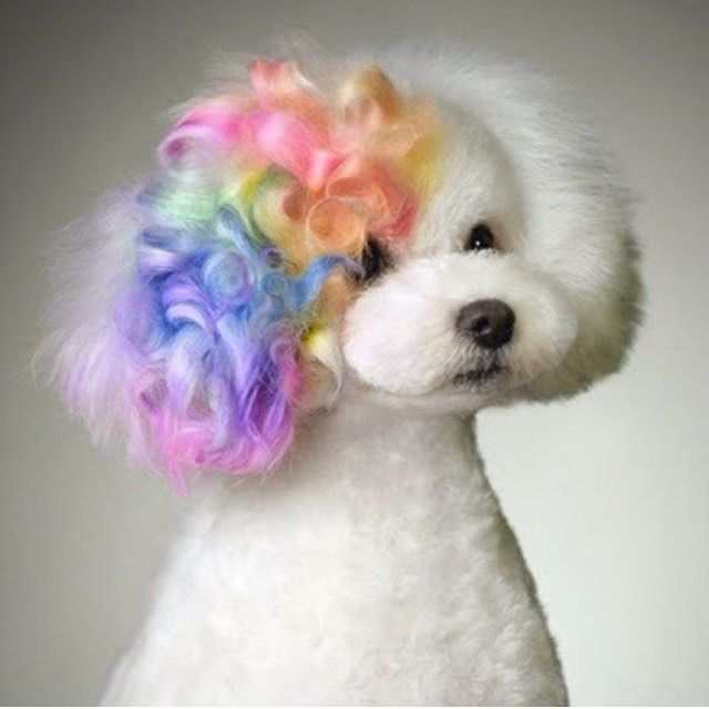 116 Best Images About Pets With Dye Jobs On Pinterest