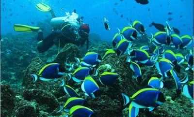 Wisata Aceh -Disabang ada 18 lokasi diving terfavori bagi diver sejati. berikut list tempat diving di sabang : 1. Iboih Beach Lokasi Diving di