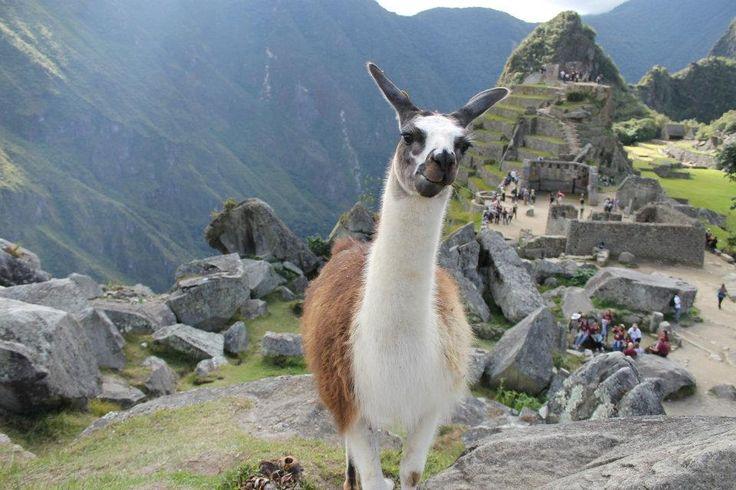 """Machu Picchu, a cidade sagrada dos incas, é um dos destinos favoritos de brasileiros e turistas de todo o mundo que visitam o Peru. Considerado Patrimônio da Humanidade desde os anos 1980, o sítio arqueológico é considerado uma união entre a ação humana e a beleza da natureza. Mas organizar uma viagem para lá requer...<br /><a class=""""more-link"""" href=""""https://viagem.catracalivre.com.br/geral/mundo-viagem/indicacao/saiba-como-organizar-sua-viagem-a-machu-picchu/"""">Continue lendo »</a>"""