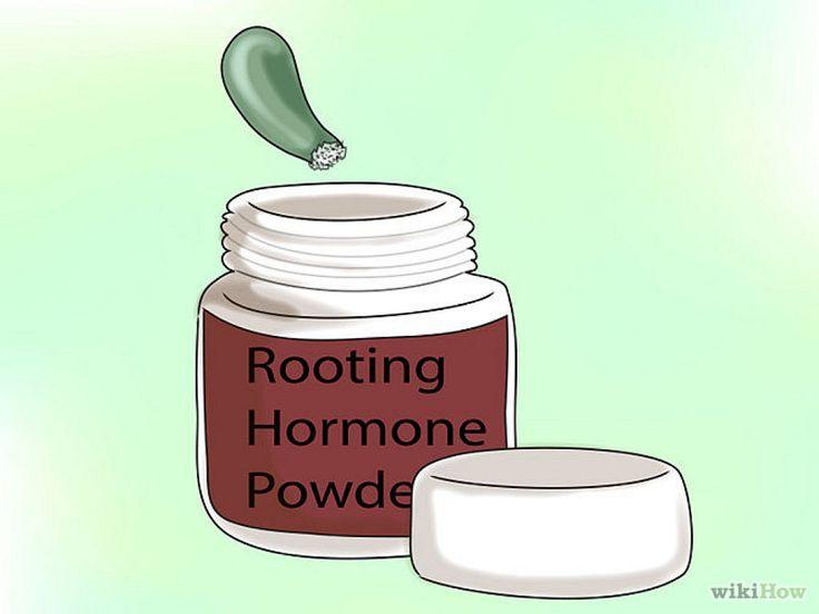 Cómo propagar suculentas de hojas