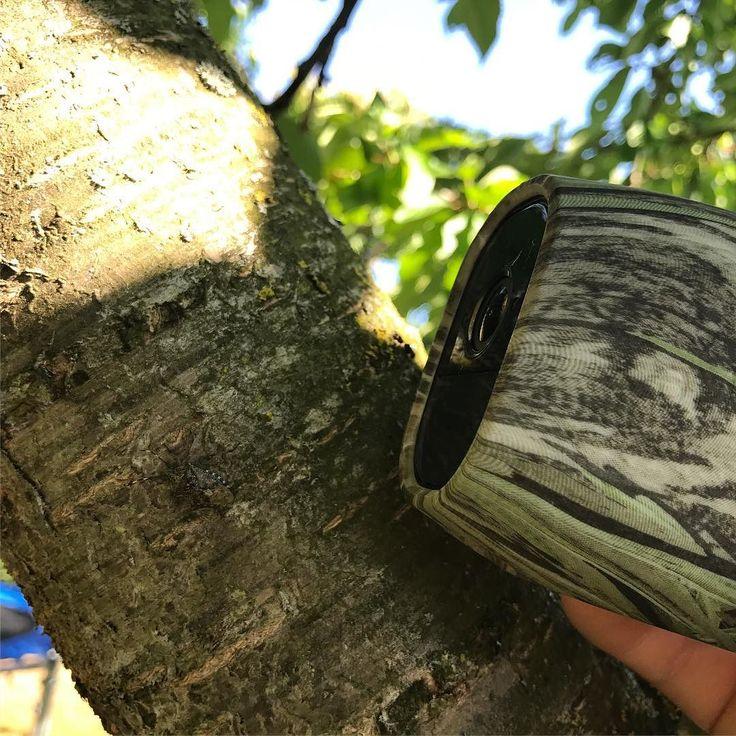 La camera #arlo de @netgear joue à cache cache dans les arbres comme cette punaise sur le tronc de l'arbre  la premiere camera hd totalement sans fil est en test au domo-lab et je suis fan! Bravo #netgear  #domotique #smarthome #iot #domoblog #connected #camera #recording #arlopro #arlocam #wireless #ipcam #test #domolab