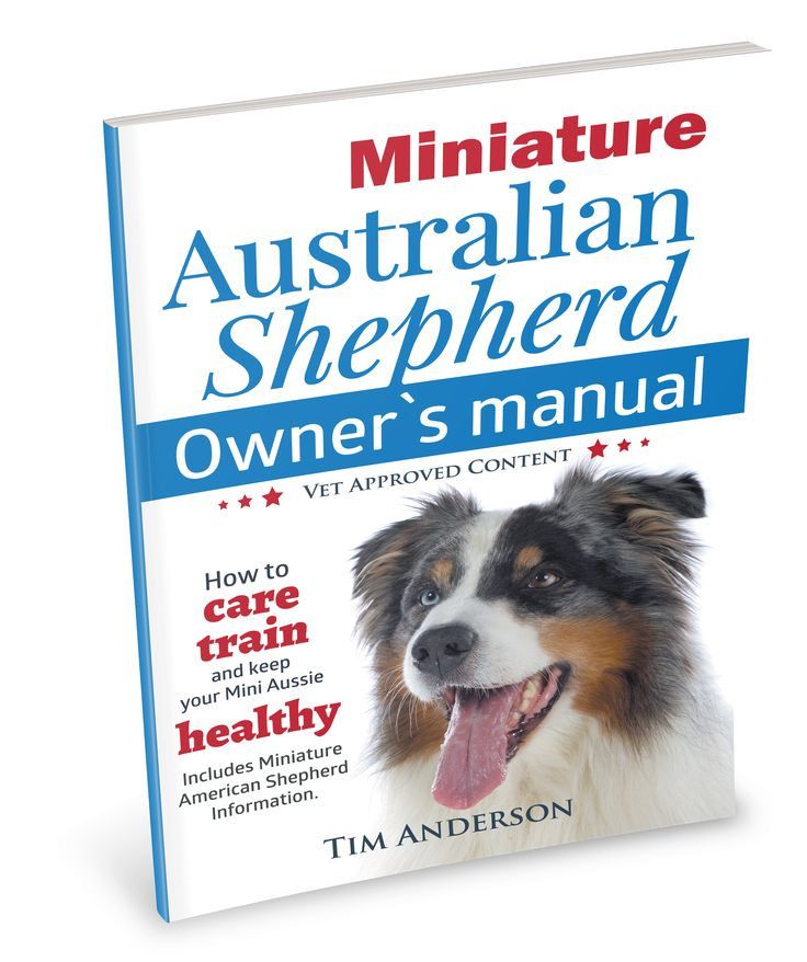 Miniature Australian Shepherd Owner's Manual. How to care, train & keep Your Mini Aussie healthy. Includes Miniature American Shepherd.Mini Australian Shepherd care, size, colors, temperament, training, grooming, exercise requirements, agility sports, feeding, life span, health, genetic conditions and more are all included. This book also includes a dedicated chapter on the American Kennel Club registered Miniature American Shepherd.