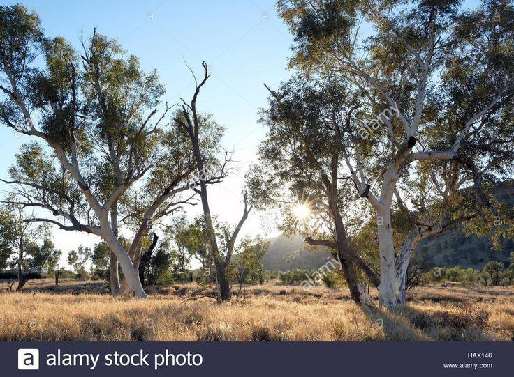 Download This Stock Image Gum Trees In Honeymoon Gap Macdonnell Ranges Northern Territory Central Australia California Travel Northern Territory Honeymoon