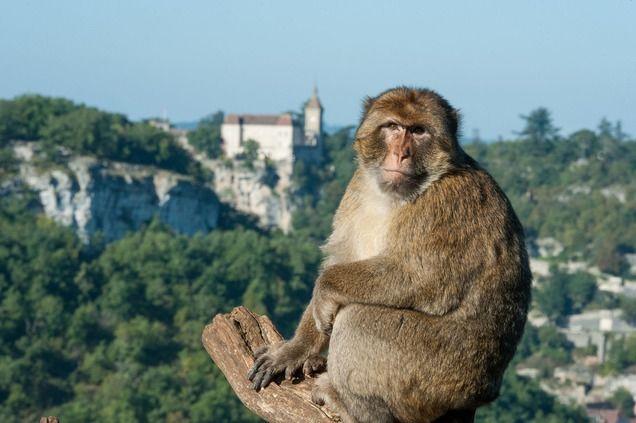 La Forêt des Singes | Vallée de la Dordogne - Rocamadour - Padirac | Office de Tourisme