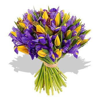 Букет состоит из 25 ирисов и 26 тюльпанов  http://www.dostavka-tsvetov.com/shop/75/desc/vechernyaya-zarya
